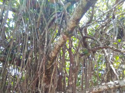 Джип сафари в национальный парк Серро Копей и парк Ля Рестинга